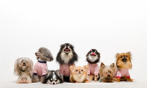 ~世界の税金から~ 犬税